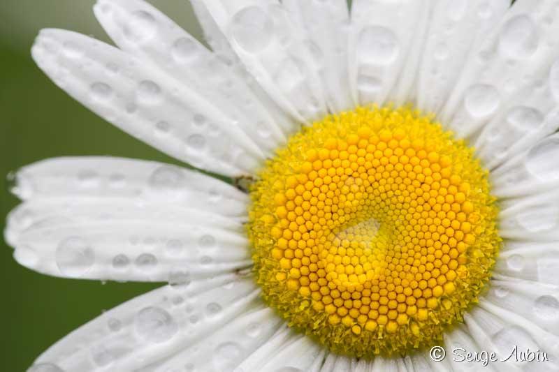 Fleurs et plantes vertes