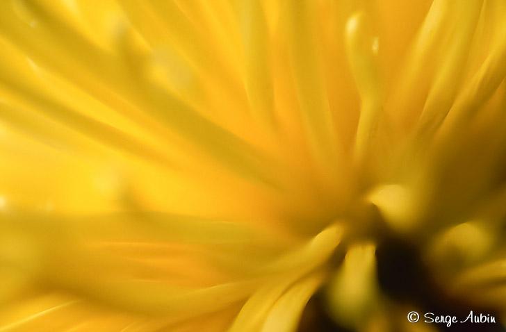SergeAubin.ca-macrophotographie-2