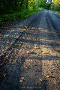 Atelier PHOTO d'automne à Frelighsburg